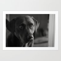 Black Labrador Portrait Art Print