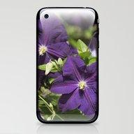 Longwood Gardens - Sprin… iPhone & iPod Skin