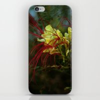 spidery red iPhone & iPod Skin