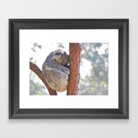 Sleeping In The Trees - … Framed Art Print