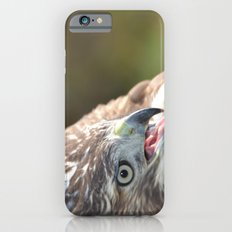 Red Tailed Hawk Close Up iPhone 6 Slim Case