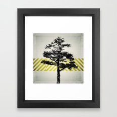 Ulmus parvifolia (Defying the Odds) Framed Art Print