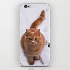 Ginger Kitty Discovers Snow! iPhone & iPod Skin