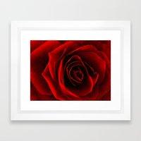 rose d'amour Framed Art Print