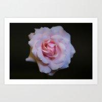 Rose_1 Art Print