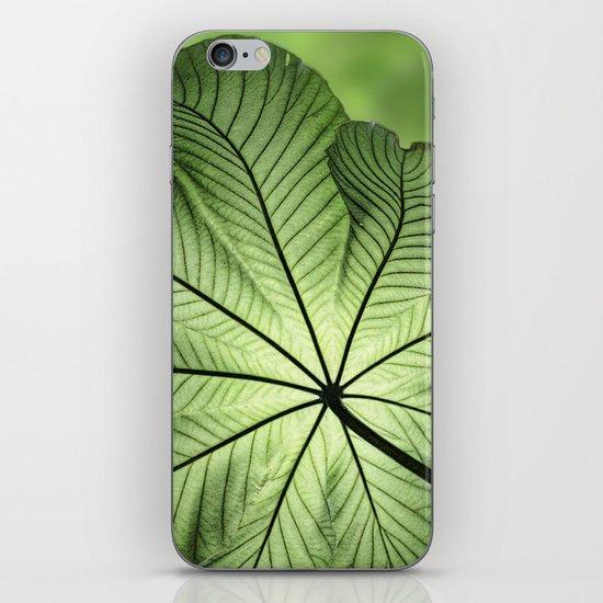 Canopy iPhone & iPod Skin