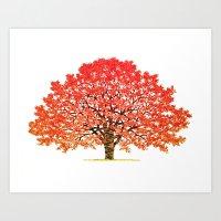 Japanese Maple 1 Art Print