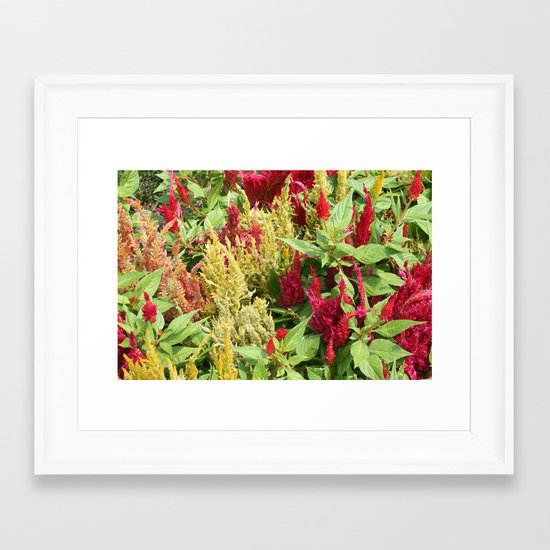 DC Flowers Framed Art Print