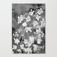 Queen Anne's Lace Wildfl… Canvas Print