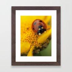 Ladybug macro still life  Framed Art Print