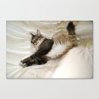 Cat Dreaming Canvas Print