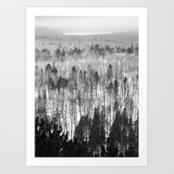 Algonquin Park In Winter… Art Print