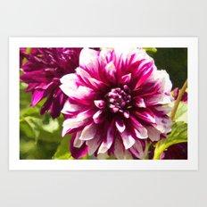 Purple Dahlia Passion  Art Print