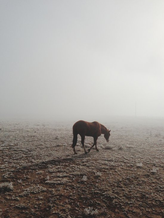 Fogged Horse Art Print
