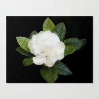 Gardenia in the garden - free shipping Canvas Print