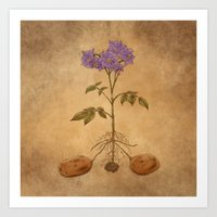 Anatomy of a Potato Plant Art Print