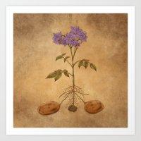 Anatomy Of A Potato Plan… Art Print