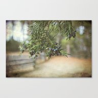 Winter's Bounty Canvas Print
