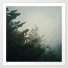Foggy Pine Trees Art Print