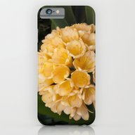 iPhone & iPod Case featuring Clivia Apricot by Deborah Janke