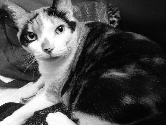 Cat. A portrait.  Art Print