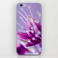 Purple Bloom iPhone & iPod Skin