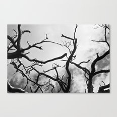 Spines of the Sky Canvas Print