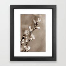 KNOSPEN - SEPIA Framed Art Print