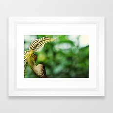 Here I Come  Framed Art Print