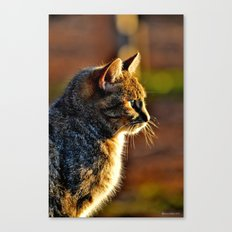 Jules Cat Canvas Print