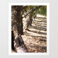 Olive Orchard Art Print