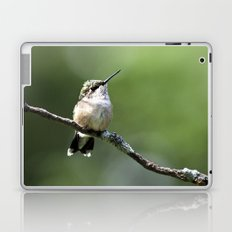 Hummingbird Perch Laptop & iPad Skin