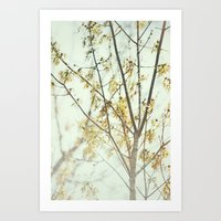 March Roars -- Maple Tree with Keys (Seeds) Spring Botanical Art Print