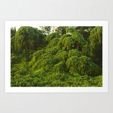 Jungle Plants in Pantanal, Brazil. Art Print