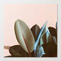 Ficus Elastica #1 Canvas Print