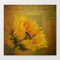 Sunflower Magic Canvas Print