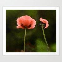 Couple Pink Oriental Poppies Art Print