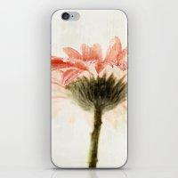 Gerbera Turnaround iPhone & iPod Skin