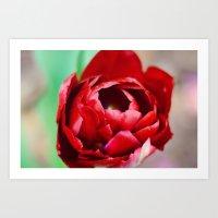 Maroon Tulip Art Print