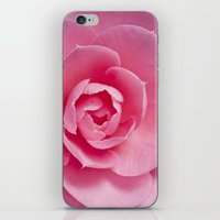 Camellia Close Up iPhone & iPod Skin