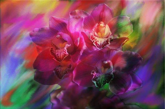 Coronation Orchids Art Print