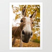 Curious Donkey Art Print