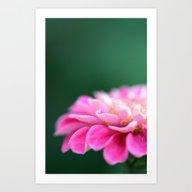 Art Print featuring Pink Macro Flower by Hannah