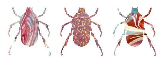 Painted Beetles Canvas Print