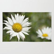White daisy flowers Rug