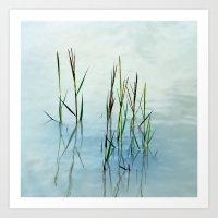 Water grass Art Print