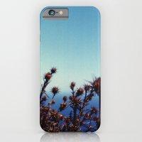 Sun-Bleached Blossom iPhone 6 Slim Case