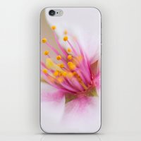 Magenta Stamen iPhone & iPod Skin