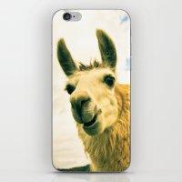 No Drama Llama iPhone & iPod Skin