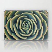 Echeveria x Imbricata Succulent Laptop & iPad Skin